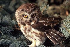 tiny owls - Buscar con Google