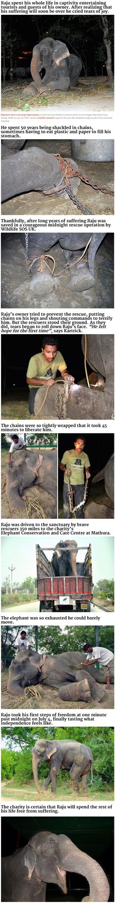 Elephant cries after being rescued from 50 years of suffering.