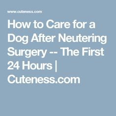 40 Best Dog Spaying Recovery images | Your dog, Dog spay ...