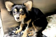 Milo: Terrified and alone, this sweet boy desperately needs out of SC shelter