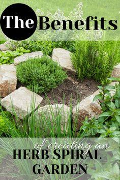 How to Start a Small Herb Spiral Garden Herb Garden In Kitchen, Diy Herb Garden, Herb Garden Design, Garden Ideas, Herb Gardening, Garden Tips, Garden Inspiration, Vegetable Garden, Herb Spiral