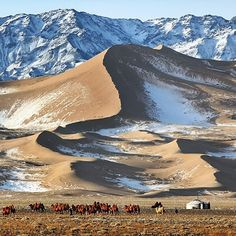 The life of a nomadic family in the Gobi Desert