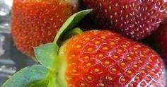 Além da vantagem de não serem produzidos com agrotóxicos, os morangos obtidos pelo sistema orgânico são mais firmes e doces do que os cultivados de forma c...