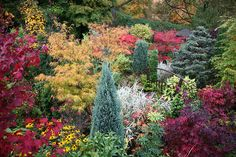 Conifers, acer maples, grasses