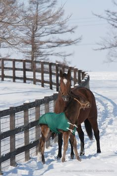 #Mare #foal #winter