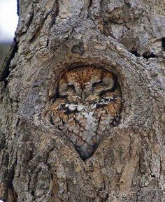 This owl looks like part of the tree
