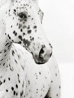 I love spots, and I love the look in this horse's eyes. What is he thinking?