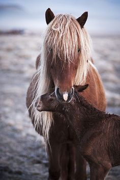 Horse and foal     |   #perspicacityparty #lovecomesnaturally