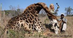 TELL Ministry of the Environment in South Africa, Namibia and Zimbabwe:  STOP TROPHY HUNTING GIRAFFES!  PLEASE SIGN AND SHARE VIRALLY IN PROTEST! 324,783 signatures - HELP get to 500,000