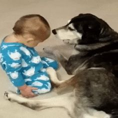 Keeper of the Dream. #dogandbaby   #doglovers