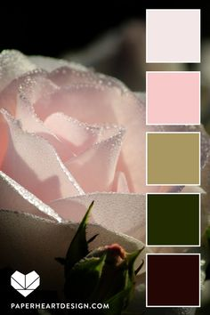 Color Palette: You Can Learn a Lot of Things From the Flowers — Paper Heart Design Color Schemes Colour Palettes, Colour Pallette, Color Palate, Color Combos, Design Seeds, Colour Board, Color Swatches, Color Theory, Pantone