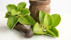 Rýmovník – pomáhá s nachlazením i stresem Natural Asthma Remedies, Ayurvedic Remedies, Home Remedies, Ayurvedic Herbs, Asthma Symptoms, Essential Oils For Asthma, Herbal Leaves, Home Medicine
