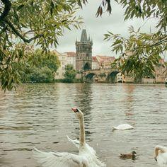 'swan dance' on Picfair.com