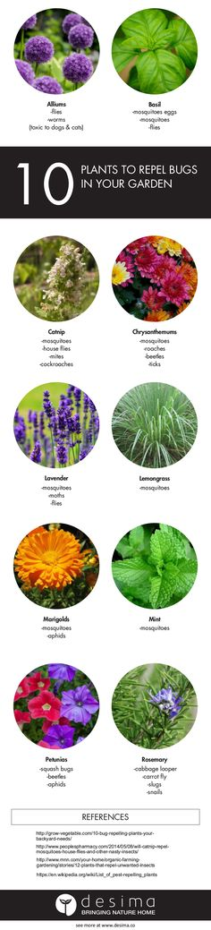 Use these 10 plants in your backyard to help prevent unwanted insects. Sign  up to our newsletter and I will let you know when this article has been  updated with much more handy tips. Cheers!  Remember if you use this infographic on your website, you must have a link  back to this page and our
