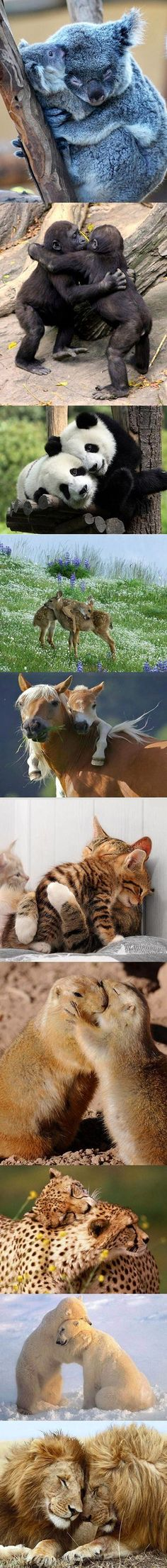 Everyone needs a hug at one time or another, including these animals.