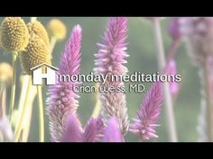 Inspirational Videos By Hay House - Motivational Speeches & Free Health & Wellness Videos - HealYourLife.com