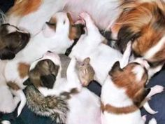 The story of Finnegan, the orphan squirrel, adopted by Mademoiselle Giselle, a pregnant Papillion