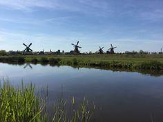 Dutch #windmills