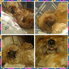 Моя собака;)