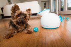 Pet Health Blog: 7 Cool Tech Gadgets for Your Pet on Summer Vacation