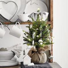 Mini Faux English Pine Tree | The White Company