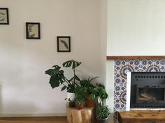Fireplace and plants