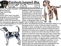 Catahoula Leopard Dog Catahoula Cur, Hog Dog, Leopard Dog, Dog Facts, Dogs Of The World, Dogs And Puppies, Doggies, Service Dogs, Dog Life