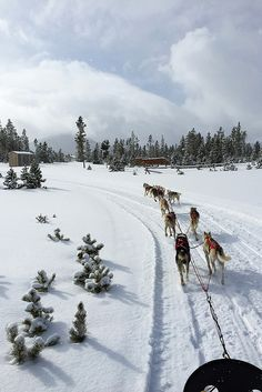 Dog Sledding - Snow Mountain Ranch - Winter Park, CO