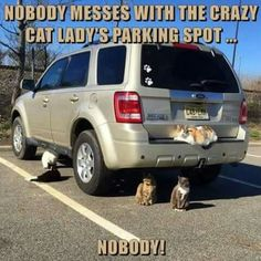 Nobody messes with the crazy cat lady's parking spot... NOBODY!