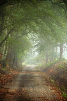🇺🇸 Fog on a country road (Alabama) by Wes Thomas cr. Beautiful Roads, Life Is Beautiful, Beautiful Landscapes, Beautiful Places, Beautiful Pictures, Country Life, Country Roads, Vie Simple, Beau Site