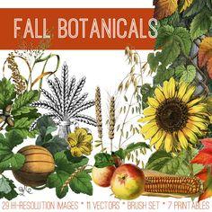 Beautiful Fall Botanicals Image Kit! TGF Premium - The Graphics Fairy