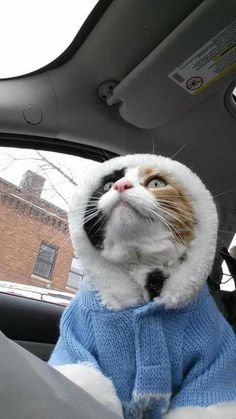 Funny cat pictures feature fashion kitty dressed to impress. Get your daily dose of funny kitty videos and images here at Kitty Humor. Funny Animal Photos, Cute Animal Pictures, Funny Cat Pictures, Funny Animals, Cute Animals, Funny Cats, Crazy Cat Lady, Crazy Cats, I Love Cats