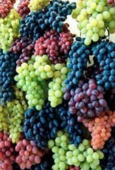 Grapes, Grapes and More Grapes