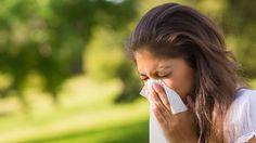 Descubren un tratamiento para la cura de todas las alergias. Investigadores de la Universidad de Queensland (Australia) han desarrollado un tratamiento que podría ser capaz de acabar con todas las alergias ya que pone el foco en el sistema inmune y no, en los síntomas. Hasta ahora, solo ha sido probado en animales. No obstante, afirman, que está destinado a curar, en un principio, las más graves.
