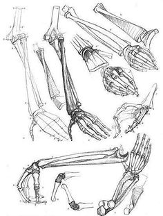 Arms, hands and bones