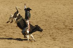 in Tour: Rodeo Special British Columbia, Rodeo, Camel, Horses, Animals, Adventure Trips, Tours, Canada, Animales