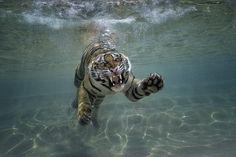 Splash Zone by San Diego Zoo Global, via Flickr