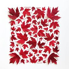 If you'd like to see these leaves in your inbox as a free print tomorrow morning, you can sign up for my newsletter on the site (scroll to the bottom of the site) or just leave your email below 👇🏻 and I'll add you. Because if being a parent has taught me anything, it's that bribery works. I pinky (pinkie?) promise to only send emails when I've made cool free stuff for you, am having an awesome sale, or find a really good brownie recipe 😊 Also, isn't our world an incredibly beautiful…