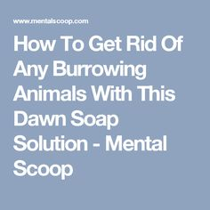 How To Get Rid Of Any Burrowing Animals With This Dawn Soap Solution - Mental Scoop