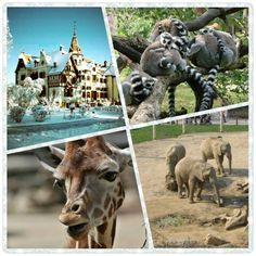 #zlín #zoo lešná #czech republic Czech Republic, Recovery, Lion Sculpture, Mountain, Horses, Statue, Animals, Art, Art Background