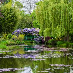 Guests to Monet's Gardens in Giverny can take pleasure in elegant and untamed fruit bushes, decorative bushes, climbing roses, daisies, … Weeping Willow, Willow Tree, Beautiful Landscapes, Beautiful Gardens, Monet Garden Giverny, Nature Aesthetic, Lily Pond, Climbing Roses, Dream Garden