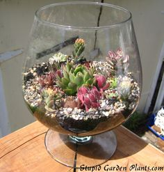 jug a lug of succulents