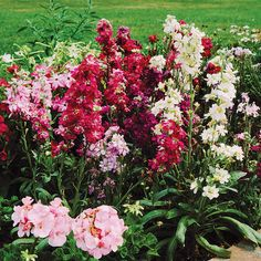 This cold-weather plant adds beautiful height to cut flowers. See more growing information here: http://www.bhg.com/gardening/flowers/annuals/best-annuals-for-cutting/?socsrc=bhgpin032615stock&page=9