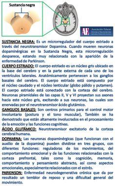 Sustancia negra. - Asociación Educar - Ciencias y Neurociencias aplicadas al Desarrollo Humano - www.asociacioneducar.com