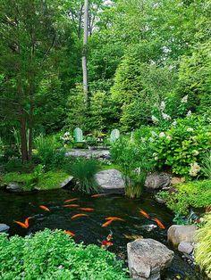 Our pond idea.