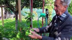 Ivan Hričovský: Pestovanie malín