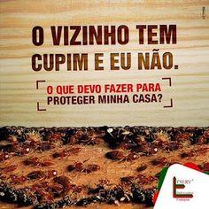 BLOG DOS INSETOS - ASSOCIAÇÃO BRASILEIRA DE FRANCHISING: DICA TSERV: O VIZINHO TEM CUPIM E EU NÃO.
