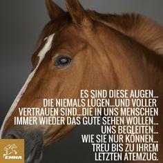 Besuche uns www.emma-pferdefuttershop.de www.my-mash.de