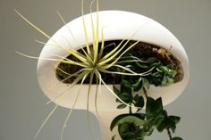 Home decoration, Interior Plants In Modern Pots: Decorating house with interior Plants to Purify the Air