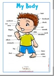 Science Activity - Let's Learn About The Parts of Our Body - FREE PRINTABLE